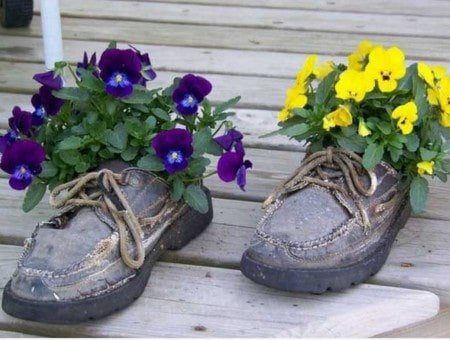 Flowers and Plants into old shoes